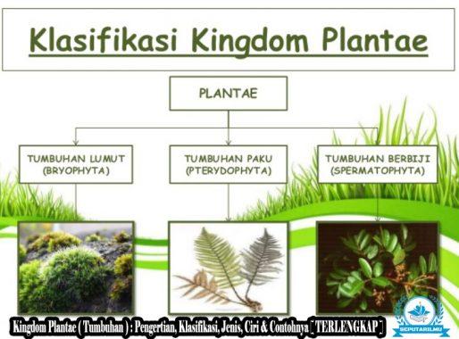 Kingdom Plantae ( Tumbuhan ) : Pengertian, Klasifikasi, Jenis, Ciri & Contohnya [ TERLENGKAP ]