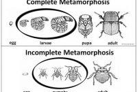√ Metamorfosis Sempurna : Pengertian, Tahapan, Ciri dan Contoh Terlengkap