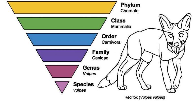 √ Taksonomi : Pengertian, Tingkatan dan Contoh Terlengkap