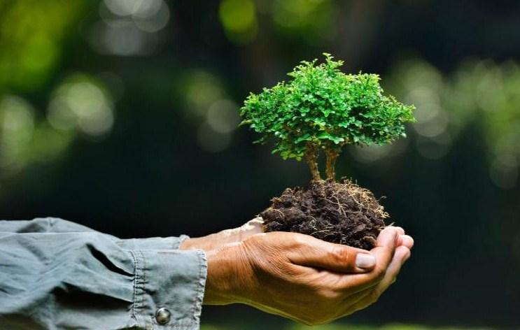 √ 14 Pengertian Lingkungan Hidup Menurut Para Ahli Terlengkap